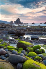 Preview iPhone wallpaper Moss stone beach sun rises