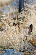 Preview iPhone wallpaper Natural bushes hare close-up