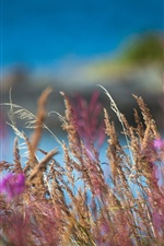iPhone обои Живые цветы макро размытия фотографий