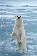 Preview iPhone wallpaper Polar bear in the cold Arctic ice