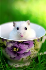 Preview iPhone wallpaper The lovely mice in the teacup