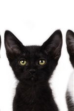 Preview iPhone wallpaper Three small black cat