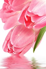 Preview iPhone wallpaper Tulip flower with water reflection