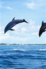 Preview iPhone wallpaper Two dolphins jumping