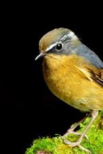 Preview iPhone wallpaper Yellow bird close-up