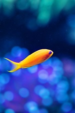 Preview iPhone wallpaper A yellow fish in the water, the fuzzy blue background