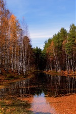 Preview iPhone wallpaper Autumn birch forest clear river