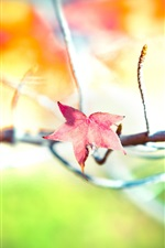 Preview iPhone wallpaper Autumn tree a red maple leaf close-up