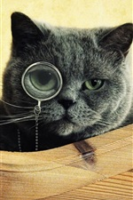Preview iPhone wallpaper Cat wear glasses to looking for something