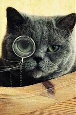Usam óculos gato à procura de algo