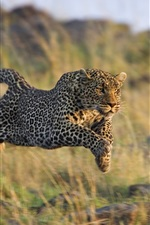 Preview iPhone wallpaper Cheetah predation rapid jumping