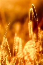 Preview iPhone wallpaper Close-up of grass in the warm sun