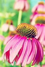Fresh purple flowers close-up