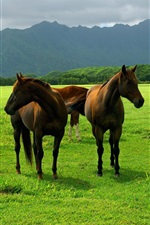 Preview iPhone wallpaper Horse grazing on the grasslands