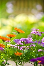 Macro photography of flowers in the garden