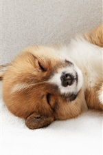 Preview iPhone wallpaper Puppy sleeping