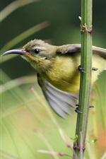 Preview iPhone wallpaper Sunbird twig grass