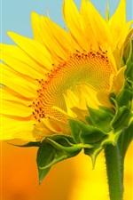 Preview iPhone wallpaper Sunflower macro photography, bokeh