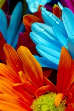 Preview iPhone wallpaper The bright colorful of chrysanthemum petals