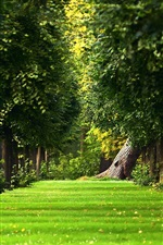 Preview iPhone wallpaper The natural summer forest green grass path