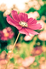 Preview iPhone wallpaper The park red flowers blur photography