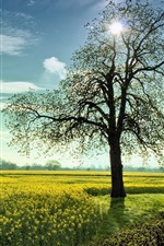 Preview iPhone wallpaper Vegetable rape flowers and tree sunrise landscape