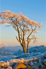 Preview iPhone wallpaper Winter trees and grass, the sun warm