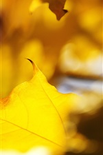 Preview iPhone wallpaper Close-up of yellow leaves in the autumn sun