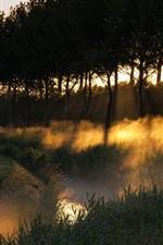 Preview iPhone wallpaper Dusk landscape, fog forest