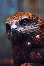 Preview iPhone wallpaper Eagle eyes, close-up photography