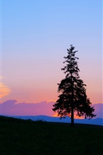 Preview iPhone wallpaper Evening sunset, mountain and tree silhouette