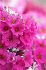 미리보기 iPhone 배경 화면 핑크 플록스 꽃 매크로