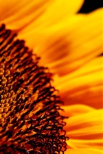 Preview iPhone wallpaper Sunflower flower close-up high definition