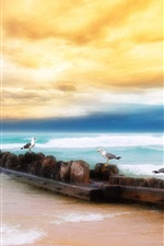 Preview iPhone wallpaper Sunset beach seagull