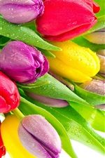 Preview iPhone wallpaper Tulip flowers with water droplets, red yellow purple flowers