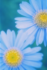 Preview iPhone wallpaper Blue daisies blurred close-up