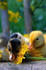 Preview iPhone wallpaper Cute little duck with yellow daisy