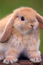 Preview iPhone wallpaper Cute rabbit standing on a tree stump