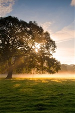 Preview iPhone wallpaper Early morning beauty, trees, grass, fog, sunrise, soft light