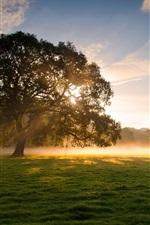 Early morning beauty, trees, grass, fog, sunrise, soft light