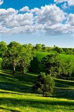 Green Valley, cenário da natureza, céu azul, nuvens brancas, as árvores, gramados, sol