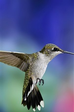 Preview iPhone wallpaper Hummingbird flight close-up, colorful blurred background