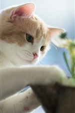 Preview iPhone wallpaper Kitten planting flowers