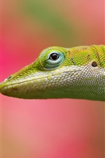 Preview iPhone wallpaper Lizard close-up, blurred background