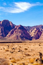 Preview iPhone wallpaper Nevada desert, rocks mountains, red rock canyon