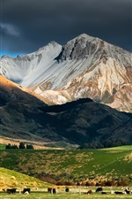 Preview iPhone wallpaper New Zealand landscape, mountain, sky, clouds, pasture, herd