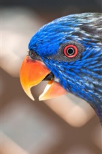 Preview iPhone wallpaper Parrot close-up, blurred background