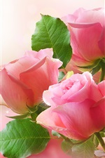 Preview iPhone wallpaper Pink roses, green leaves, bokeh photography