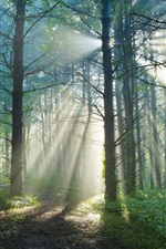 Preview iPhone wallpaper Summer morning, nature forest trail, sun light rays