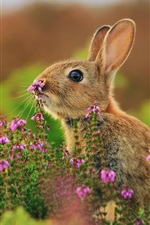 Preview iPhone wallpaper Animals close-up, hare, flowers, grass
